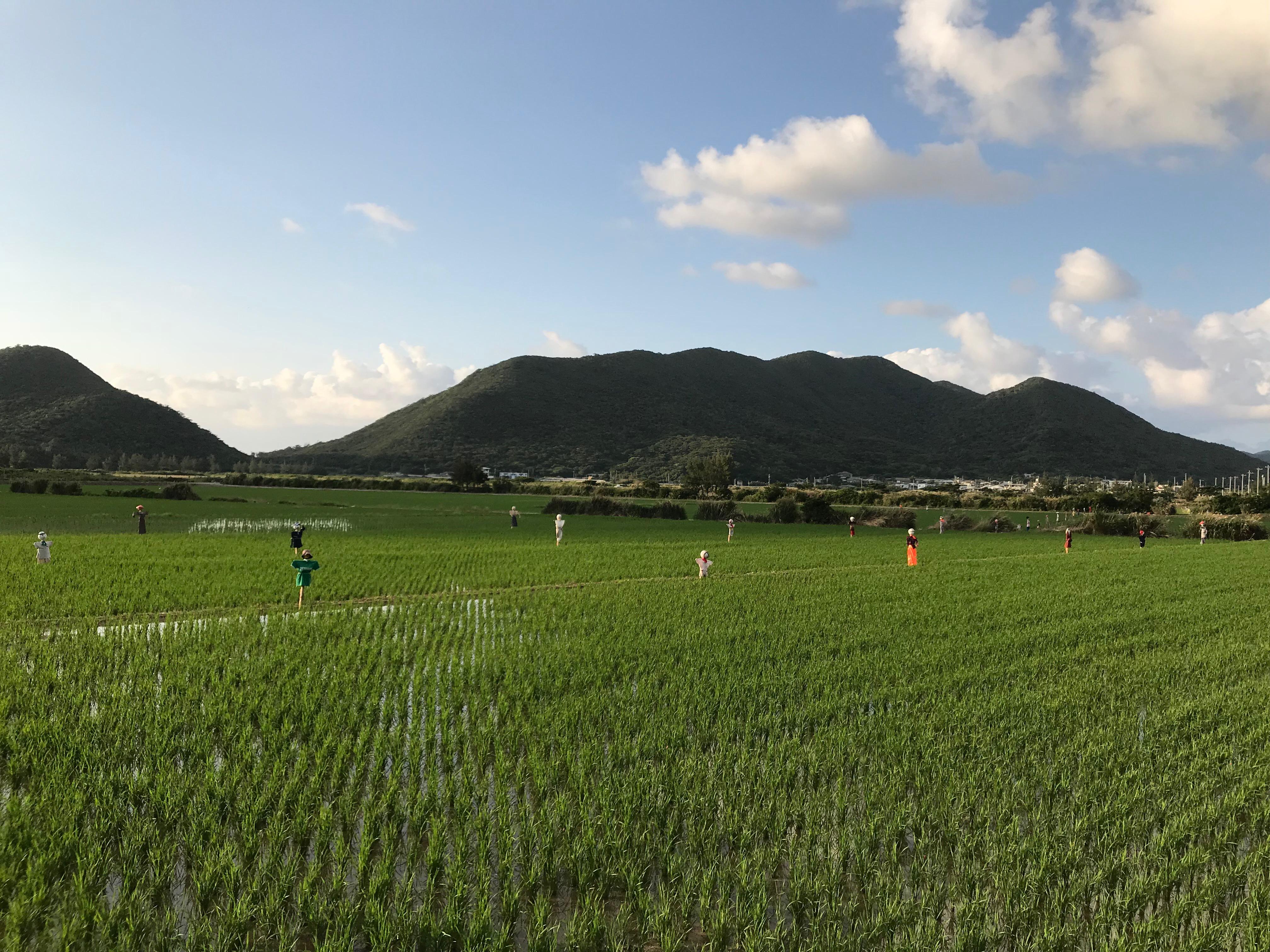 山の麓に田んぼの広がる伊平屋島の風景