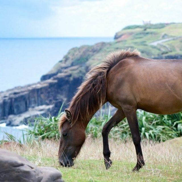 海と空に囲まれて、日本最西端の与那国馬が暮らす場所