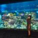 沖縄に新しくオープン「DMMかりゆし水族館」!