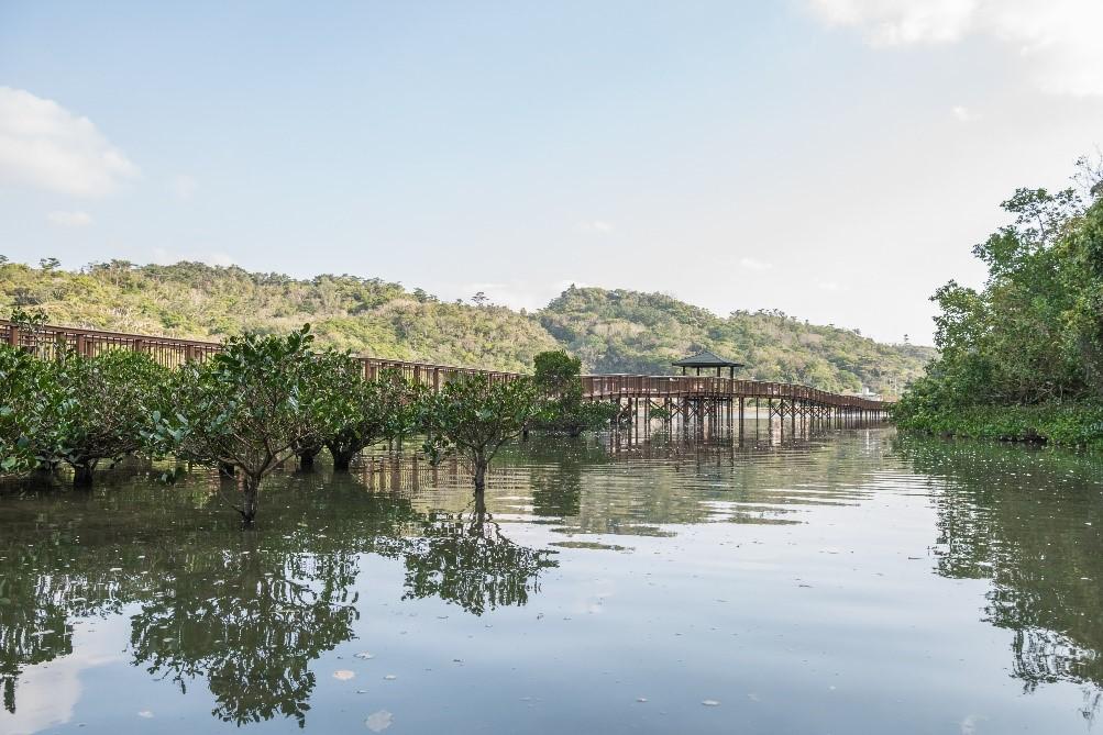 沖縄本島で二番目に大きいマングローブ林