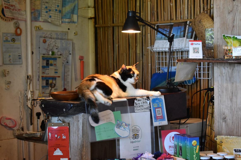 看板猫の「ミケちゃん」