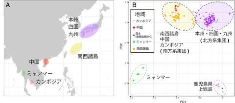 西太平洋にあるアコヤガイ個体群の分布。