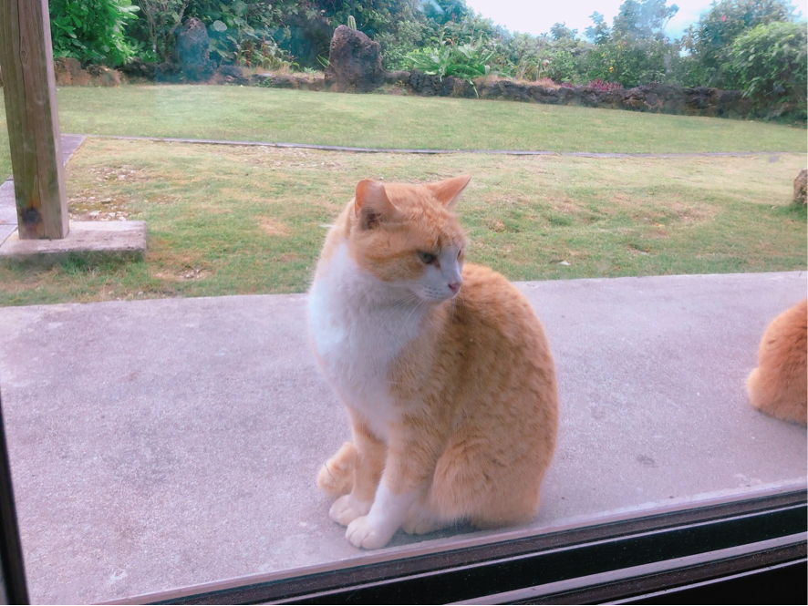久高島の猫