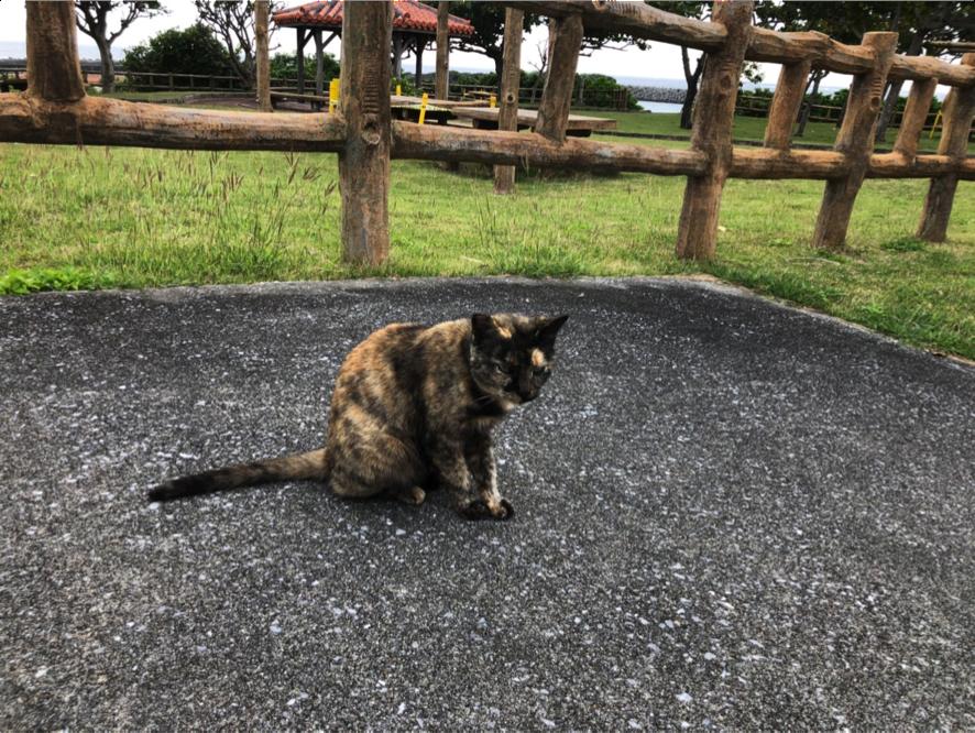 久高島のネコがお出迎え