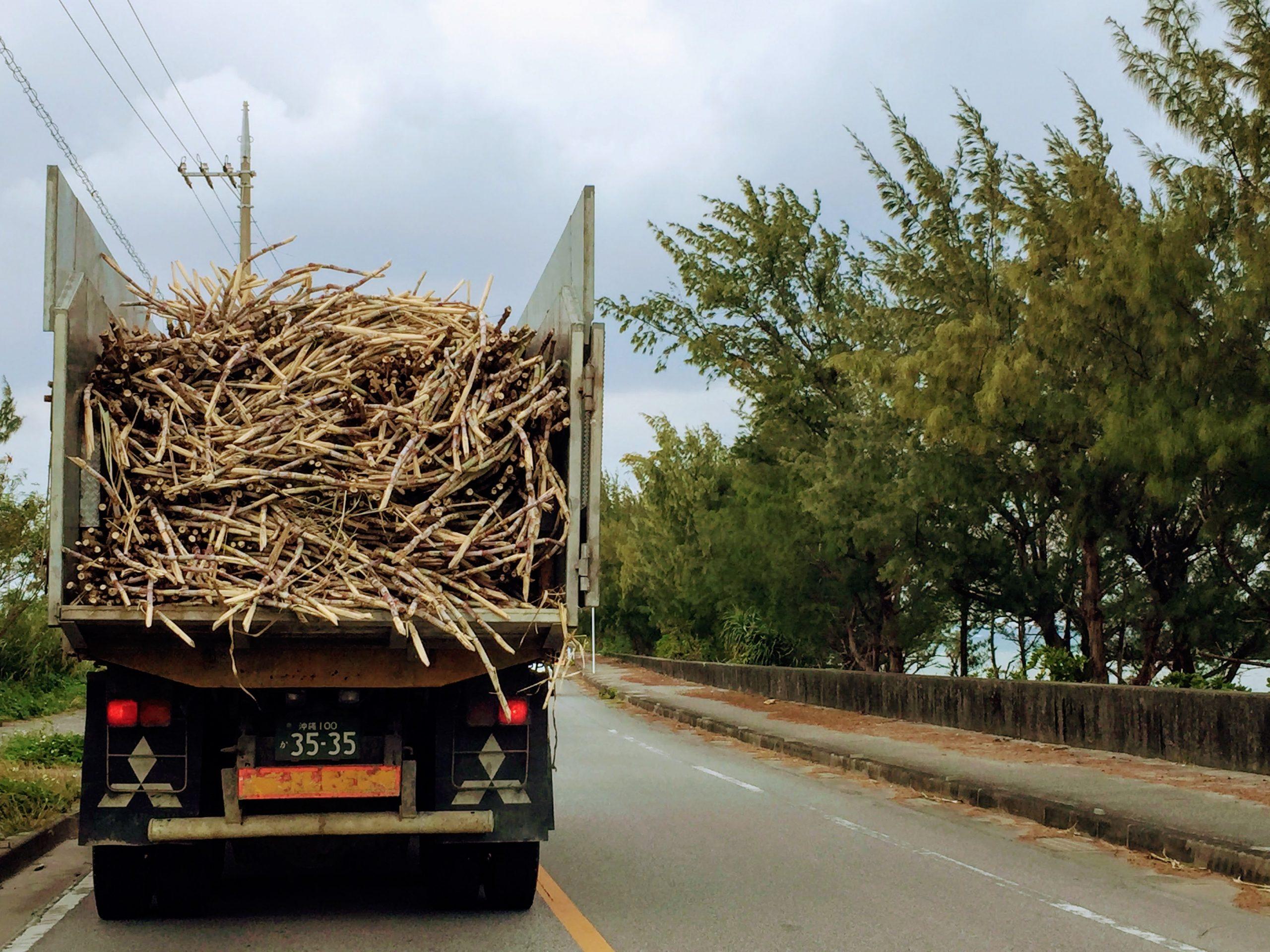 伊計島・宮城島に入るウージトラック