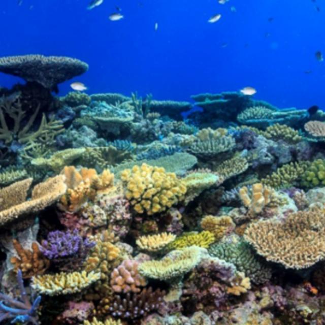 美しいサンゴや色とりどりの熱帯魚が壊滅的な被害!?その原因を紐解く