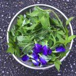 沖縄食材探訪vol.2〜身近な植物で健康維持!〜 そらいろのたね