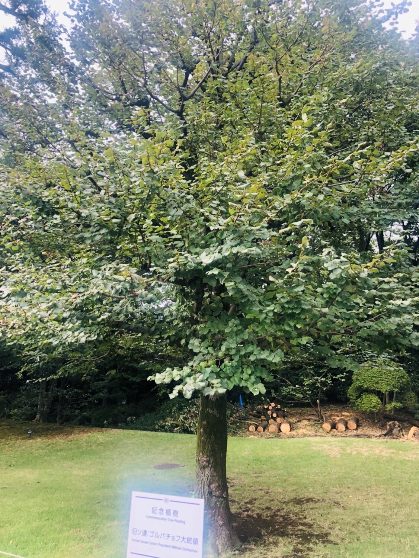 庭園の記念樹
