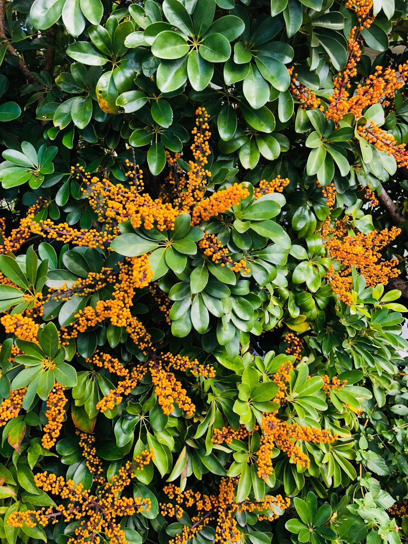 港川ステイツサイドタウンにある植物