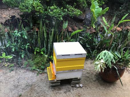 沖縄県名護市屋我地島にある人気カフェ「古民家カフェ喜色-Kiiro-」養蜂の様子