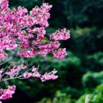【沖縄本島】日帰りで楽しめる登山・ハイキングスポット5選